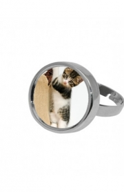 Ring Baby cat, cute kitten climbing