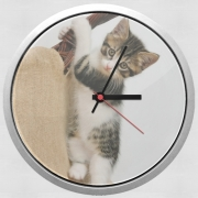 Wall clock Baby cat, cute kitten climbing