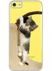 Iphone 5C Hard Case Crystal Transparent Baby cat, cute kitten climbing