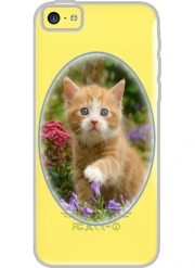 Iphone 5C Hard Case Crystal Transparent Cute ginger kitten in a flowery garden, lovely and enchanting cat