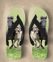 Tongs Chevaux poneys poulain